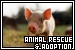 Animal Rescue & Adoption Groups